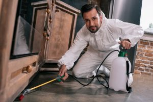 6 Guidelines for Working with Pest Control Companies